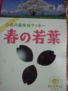 Harusakura_1